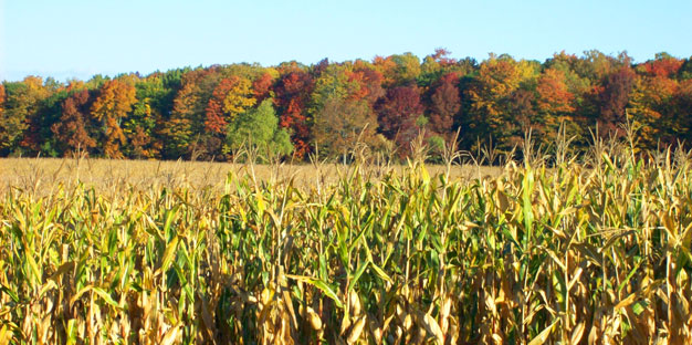 door_county_fall_corn